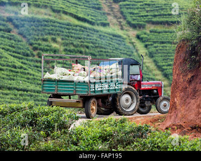Workers rest in tractor pulled wagon on bags containing freshly picked tea leaves on tea estate near Hatton, Sri - Stock Photo