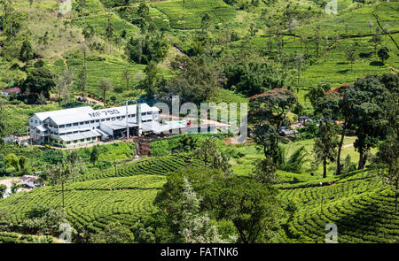 Strathdon tea factory (processing centre) on tea estate near Hatton in Sri Lanka. Pickers visible on path through - Stockfoto