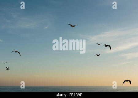 Birds flying against blue sky at sunset - Stock Photo