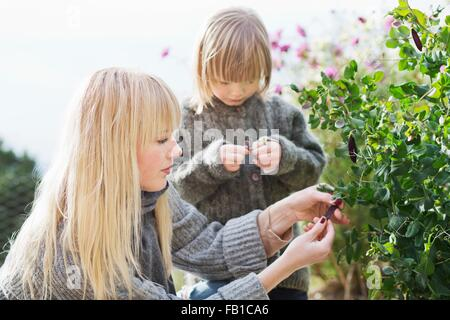 Mid adult woman and son tending bush in organic garden - Stock Photo