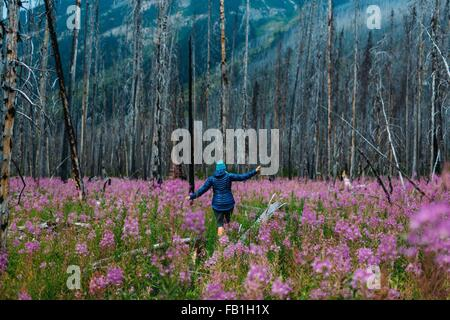 Rear view of mid adult woman balancing on fallen tree in field of wildflowers, Moraine lake, Banff National Park, - Stock Photo