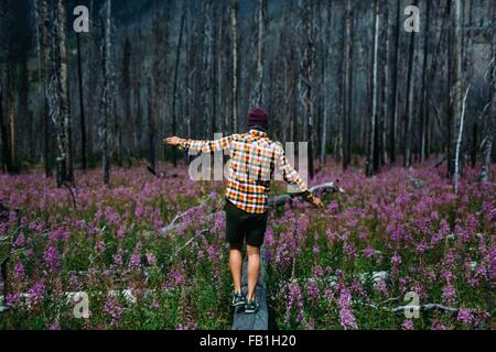 Rear view of mid adult man balancing on fallen tree in field of wildflowers, Moraine lake, Banff National Park, - Stock Photo