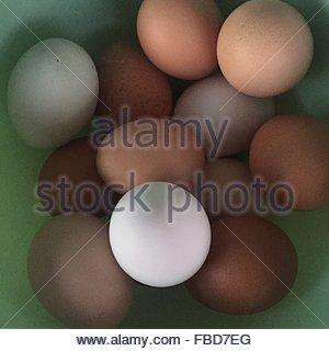 Eggs In Bowl - Stockfoto