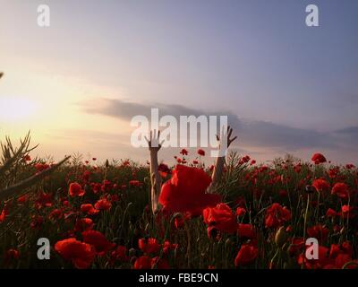 Raised Arms Of Person In Red Poppy Flower Field Against Sky - Stock Photo