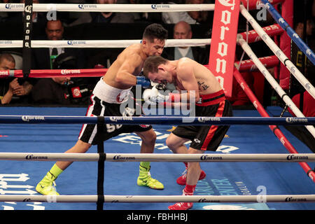 Brooklyn, New York, USA. 16th Jan, 2016. JULIAN SOSA (black trunks with white trim) and BRYAN TIMMONS battle in - Stock Photo