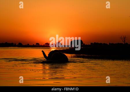 Safari sunset on the Chobe river - Stock Photo