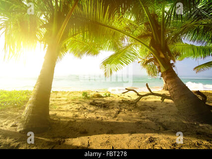 Palm trees and ocean at the bright sunrise - Stock Photo