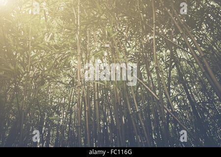 Retro Bamboo Forest with Sunlight - Stock Photo