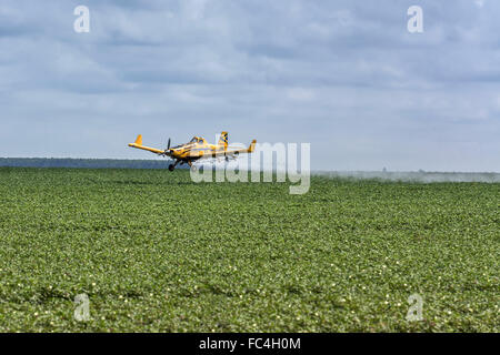 Insecticide spraying plane in soybean planting in the countryside - Stock Photo
