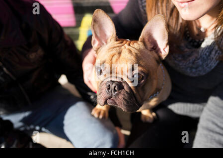 Portrait of French bulldog looking up - Stock Photo