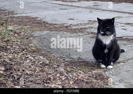 Swinoujscie, Poland, cat sitting alone on the road - Stock Photo