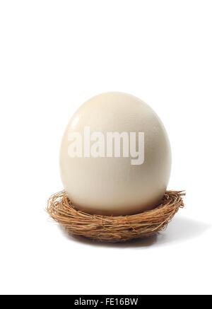 Large Egg in Nest - Stock Photo