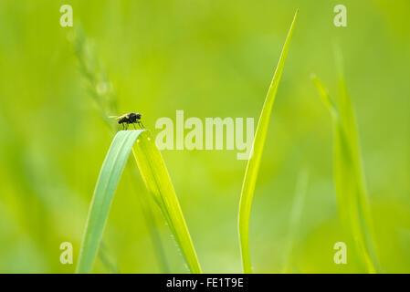 Soft green grass background - Stock Photo