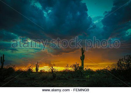 Cactus Plants Growing In Desert Against Cloudy Sky During Sunset - Stock Photo