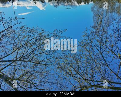 Branches Against Blue Sky - Stock Photo
