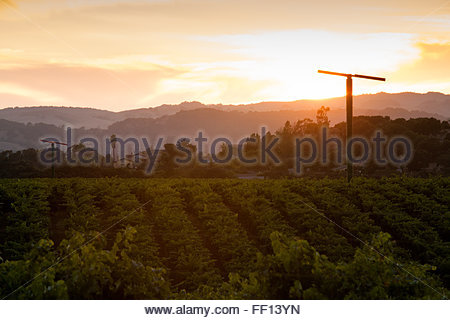 Sunset over vineyard in Napa Valley, California - Stock Photo