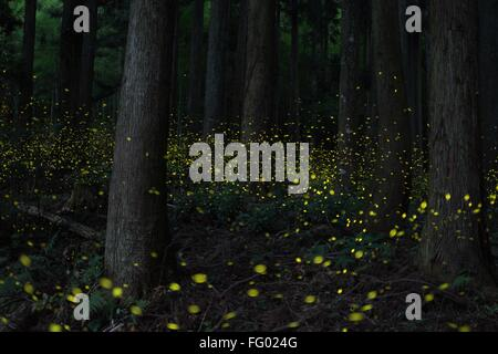 https://n450v.alamy.com/450v/fg024g/view-of-fireflies-glowing-amidst-trees-in-forest-fg024g.jpg