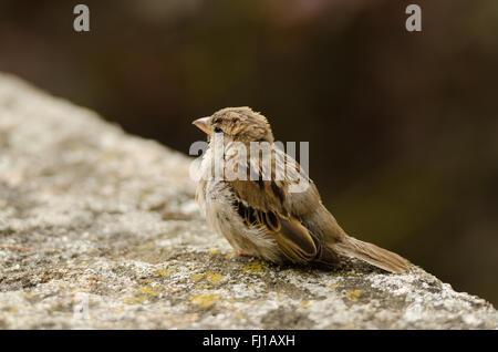 Beautiful creature in nature - Stock Photo