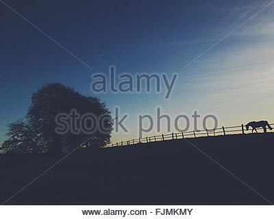 Silhouette Of Horse Walking In Ranch - Stockfoto