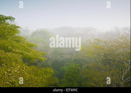 Misty rain forest at sunrise in Soberania national park, Republic of Panama. - Stock Photo