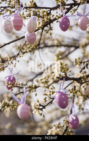 Purple easter eggs hanging on a blooming plum tree - Stock Photo