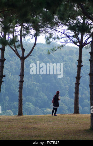 woman standing on the cliff  between pine tree - Stock Photo