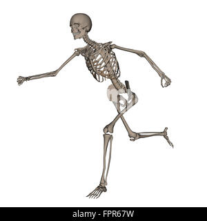 Front view of human skeleton running, isolated on white background. - Stock Photo