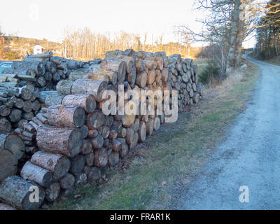 some stock from the tree that will be firewood to heat the house - Stock Photo