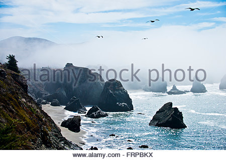 Seagulls flying over the rocky coast of northern California. - Stock Photo