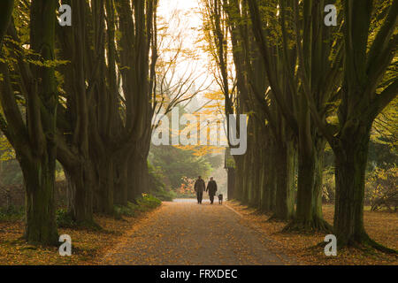 Elderly couple walking their dog through a hornbeam alley, Dortmund, North Rhine-Westphalia, Germany - Stock Photo