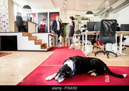 Dog sleeping on floor with business people discussing in background at office - Stock Photo