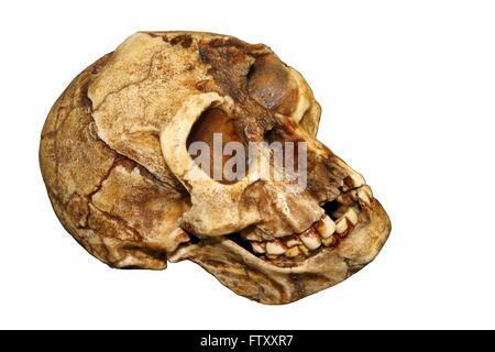 homo floresiensis the hobbit Homo floresiensis, the hobbit a reconstruction of the hobbit homo floresiensis  by atelier elisabeth daynes kinez riza if you were to travel.