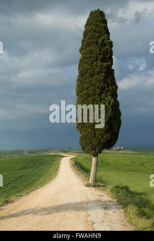 Dirty road with lonely tree in the middle of the Tuscan countryside. Storm dark sky in the background. - Stock Photo