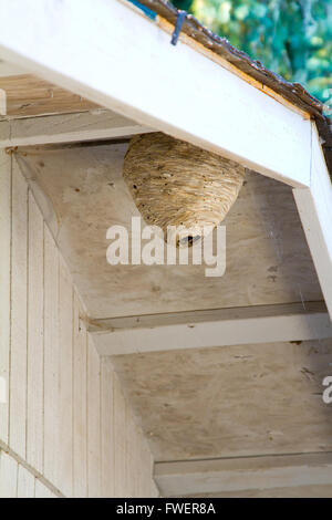 Bee Nest Structure Stock Photo Royalty Free Image