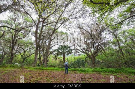 A garden scene in North Central Florida. - Stock Photo