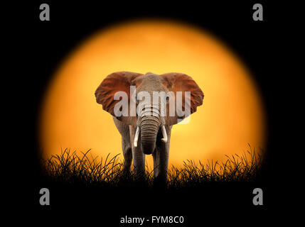 Elephant on the background of sunset. Large sun on a dark background - Stock Photo