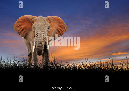 Elephant against on the background of sunset sky - Stock Photo