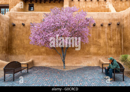 Contemplating Spring - a man studies a flowering tree while relaxing on a bench in Santa Fe New Mexico - Stock Photo