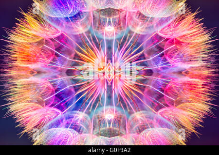 Colorful pastel background - Vivid color abstract dandelion flower - extreme closeup with soft focus - Stock Photo