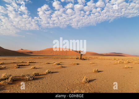 Old dead tree in front of sand dunes i Sossusvlei, Namibia - Stock Photo