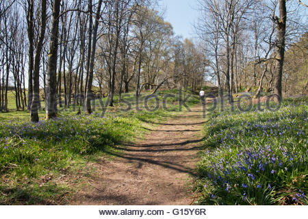 Holwick, Middleton-in-Teesdale, Co Durham, UK 9th May 2016 A hot and sunny Spring day in Upper Teesdale as a lady - Stock Photo