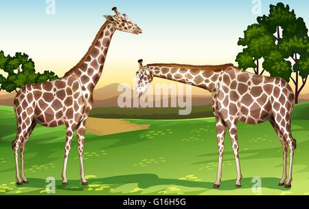 Two giraffes in the field illustration - Stock Photo
