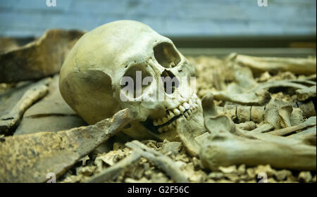 Human skeleton close up detail of the skull laid out in an open grave in a catacomb suitable for horror or Halloween - Stock Photo