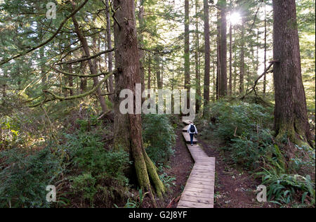 A woman walks through old growth forest on boardwalk trail down Schooner's Cove near Tofino Vancouver Island British - Stock Photo