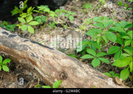 Cat in the woods - Stock Photo