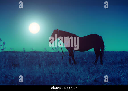 Silhouette of the horse on a meadow in the darkness - Stockfoto
