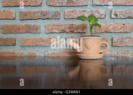 Tree in pot on wooden table and stone background. - Stockfoto