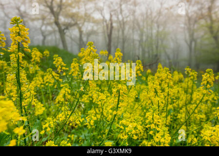 Drippign Wet Yellow Flowers in the Fog in the Virginia mountains - Stock Photo