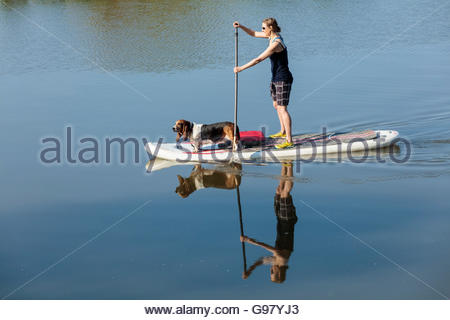 Stand up paddle boarding with dog on the Rouge River on a summer morning in Rouge National Urban Park in Toronto - Stock Photo