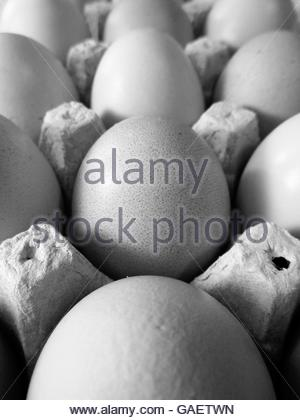 Black and white photo of brown eggs in egg carton - Stock Photo